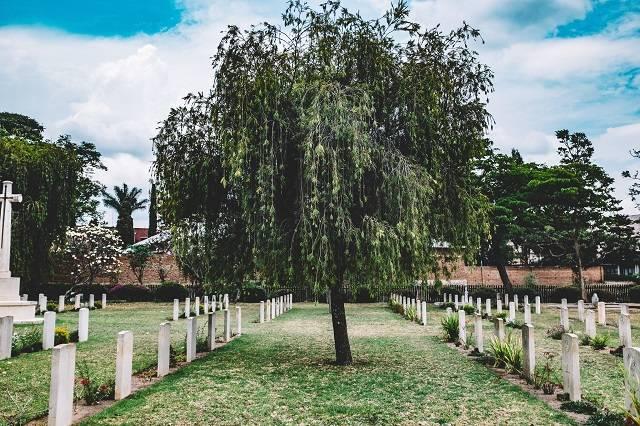 Tree in middle of cemetery