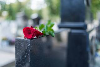 Red rose on a grave